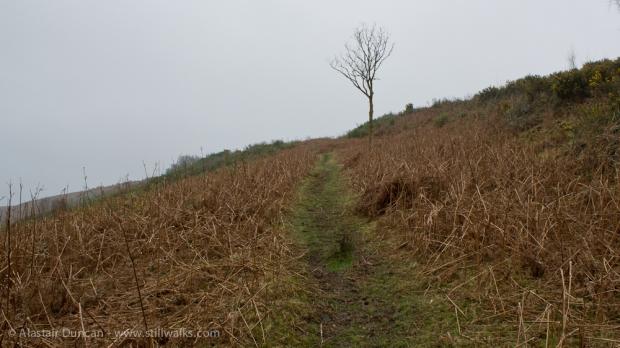 Footpath and Tree