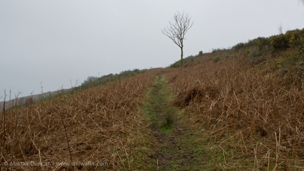 Footpath and Tree