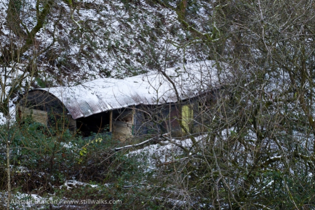 Shed in Woods