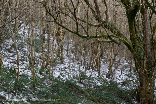 Carmarthenshire Woodland