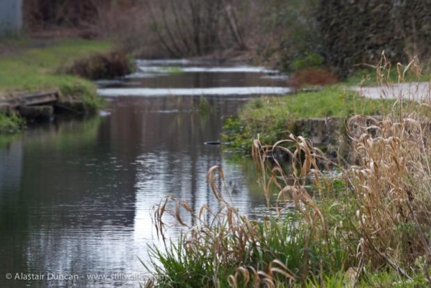 Swansea Canal at Clydach